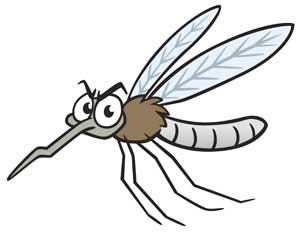 Colin The Mosquito